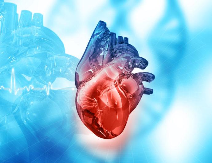 Insuffisance Cardiaque, Myocarde