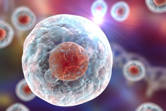 Médecine régénératrice, Cellules Souches Adultes