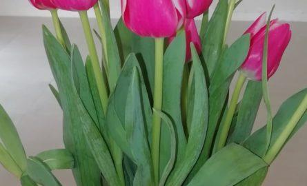 Opération Tulipes à Cœur 2020